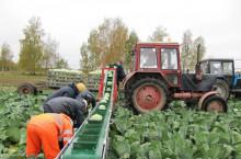 Транспортна лента за зеленчуци НОУТ 6.1